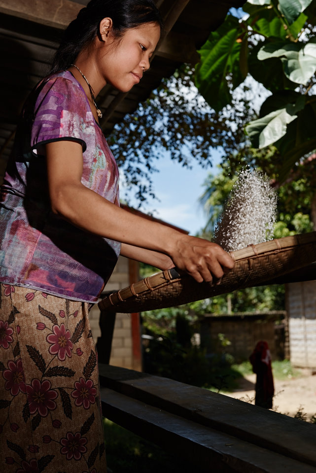 Pregnant Hmong lady working the rice