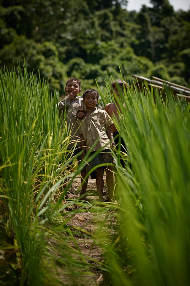 Most kids follow their parents to the rice fields to spend the day and help out. Usually these rice fields are located quite a few kilometres away from their village