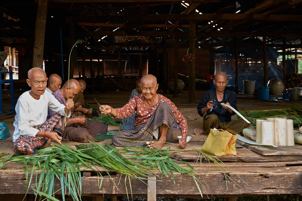 Old ladies cutting bamboo